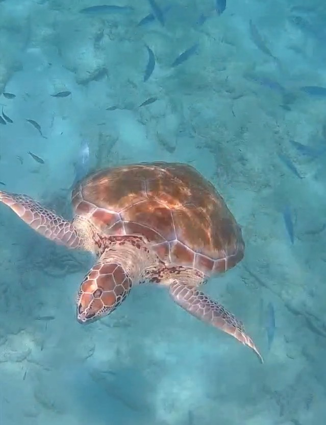 Snorkeling with Balador Catamaran In Barbados * Ginger on the Go